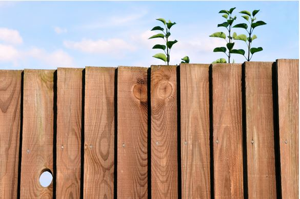 Wolmanit CX-treated timber fence